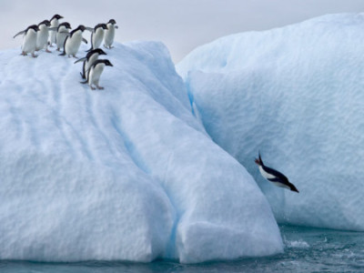 first_penguin